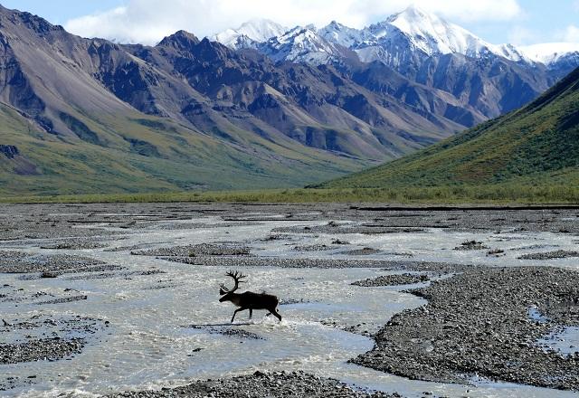Alaska USA Nationalpark