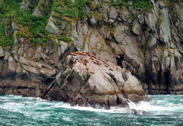 Robben auf einem Felsen