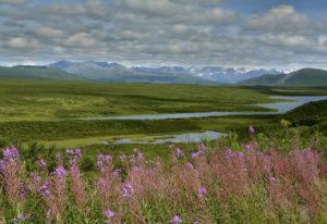 Alaska für Naturliebhaber