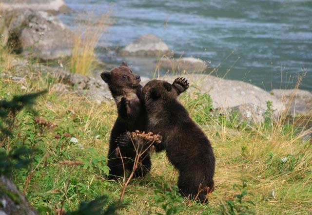 Bären und viele andere Wildtiere